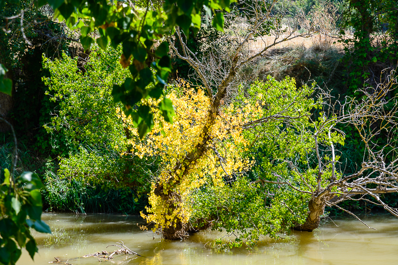 Peñafiel: Sotos del Duero