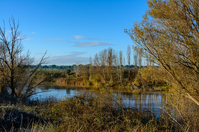 Puente Duero: Bosque de ribera