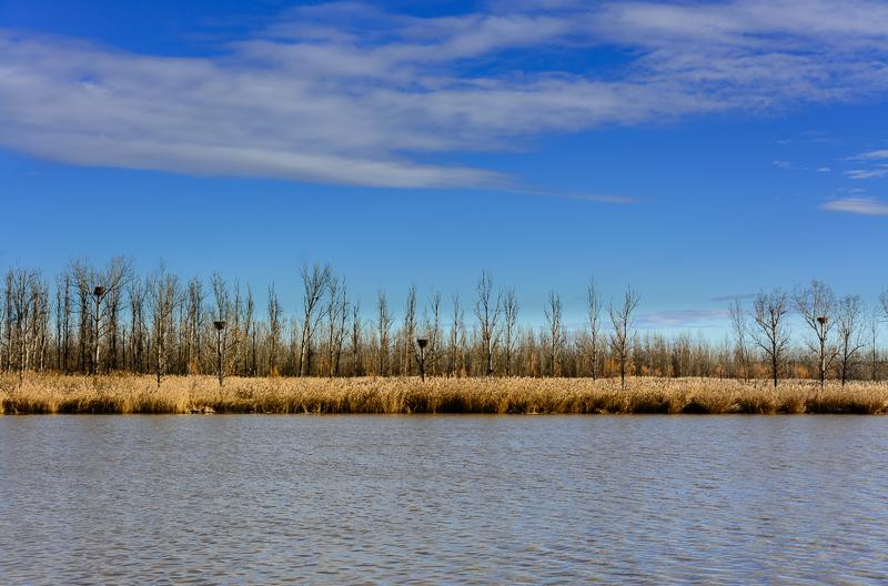 Castronuño: Carrizos en el río