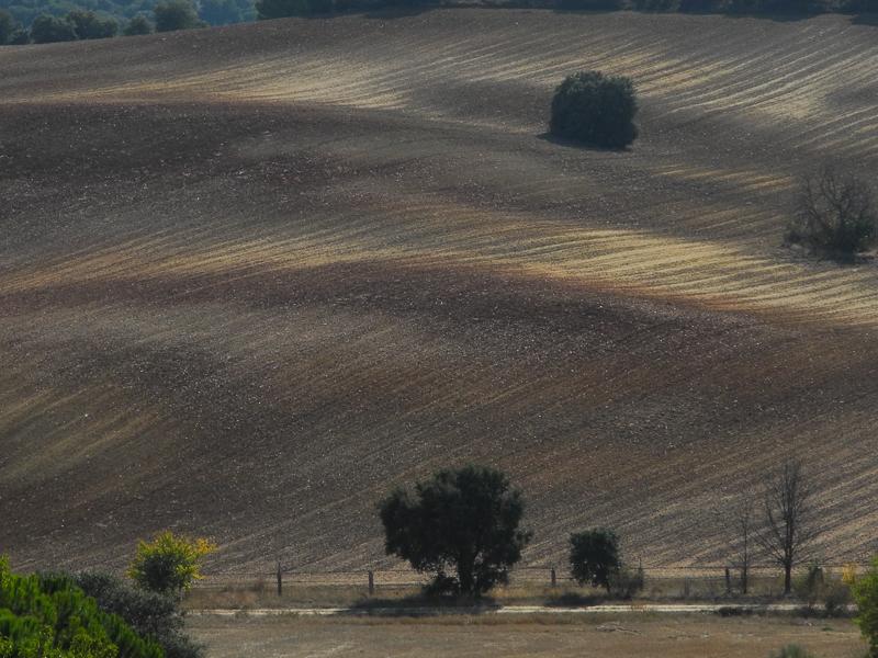 Toro: Bosque mediterráneo de encina