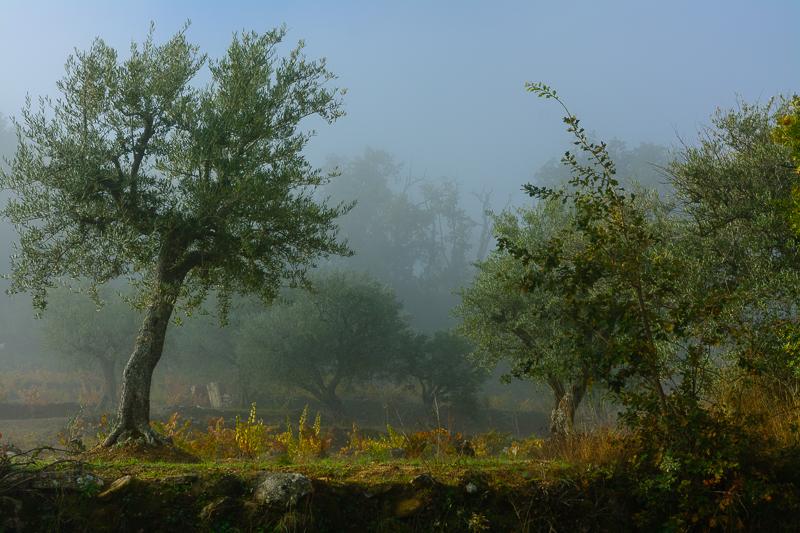 Villarino de los Aires: Huerto con olivos