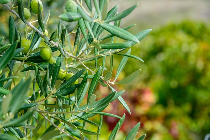 Pago de viñas y olivares