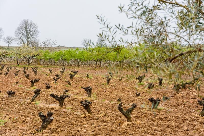 Masueco: Viñedos