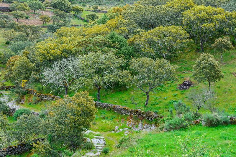 Vilvestre: El Escarbadero