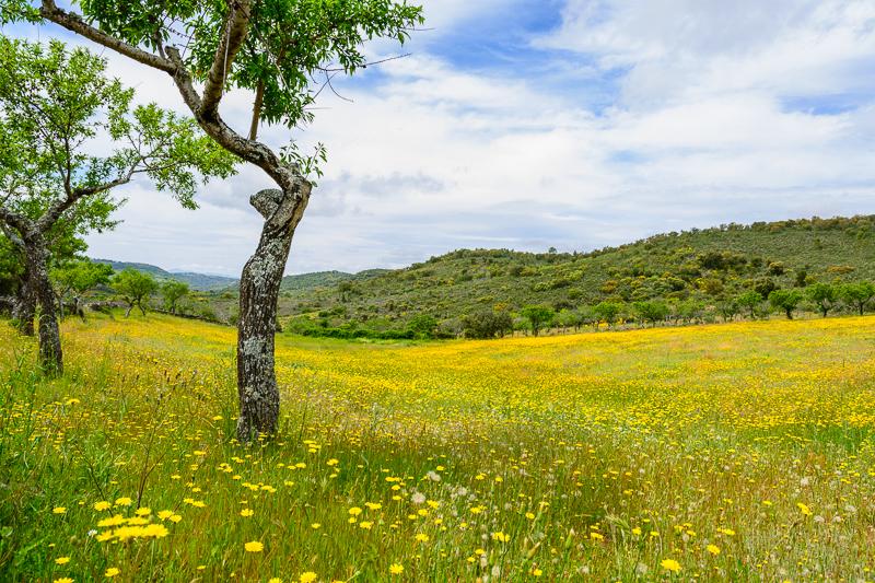 Vilvestre: Valle de Valdebarco